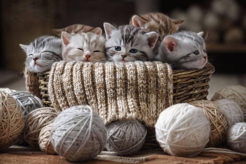 Котята и клубочки